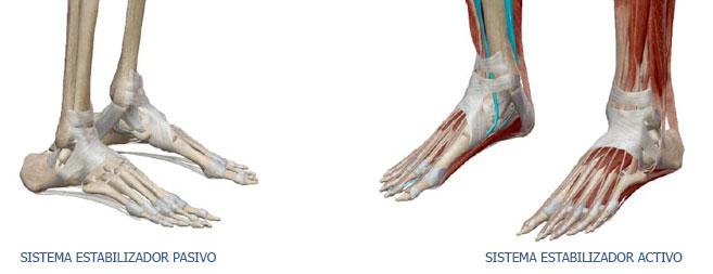 Imagen del sistema estabilizador del cuerpo humano